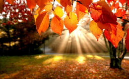 autumn-hd-wallpaper-with-trees-with-orange-leaves-and-rays-of-light
