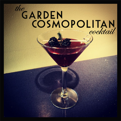 Blackberry Garden Cosmo Photo