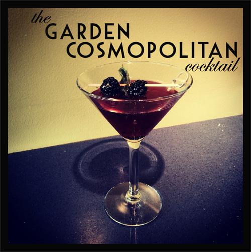 Blackberry Garden Cosmo Photo